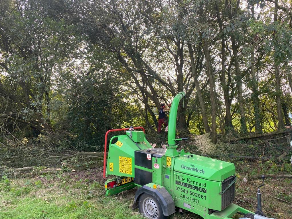 Tree & Hedge Services